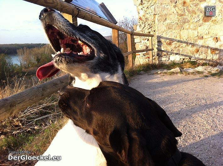 Hundevorführungen auf der Jaspowa 2013 | Foto: DerGloeckel.eu