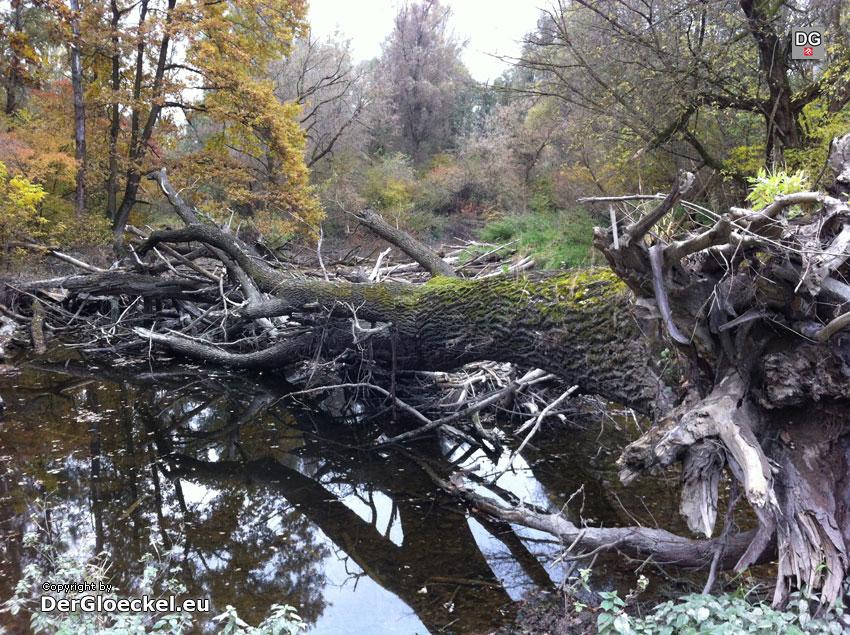 Herbst in den Donau-Auen | Foto: DerGloeckel.eu