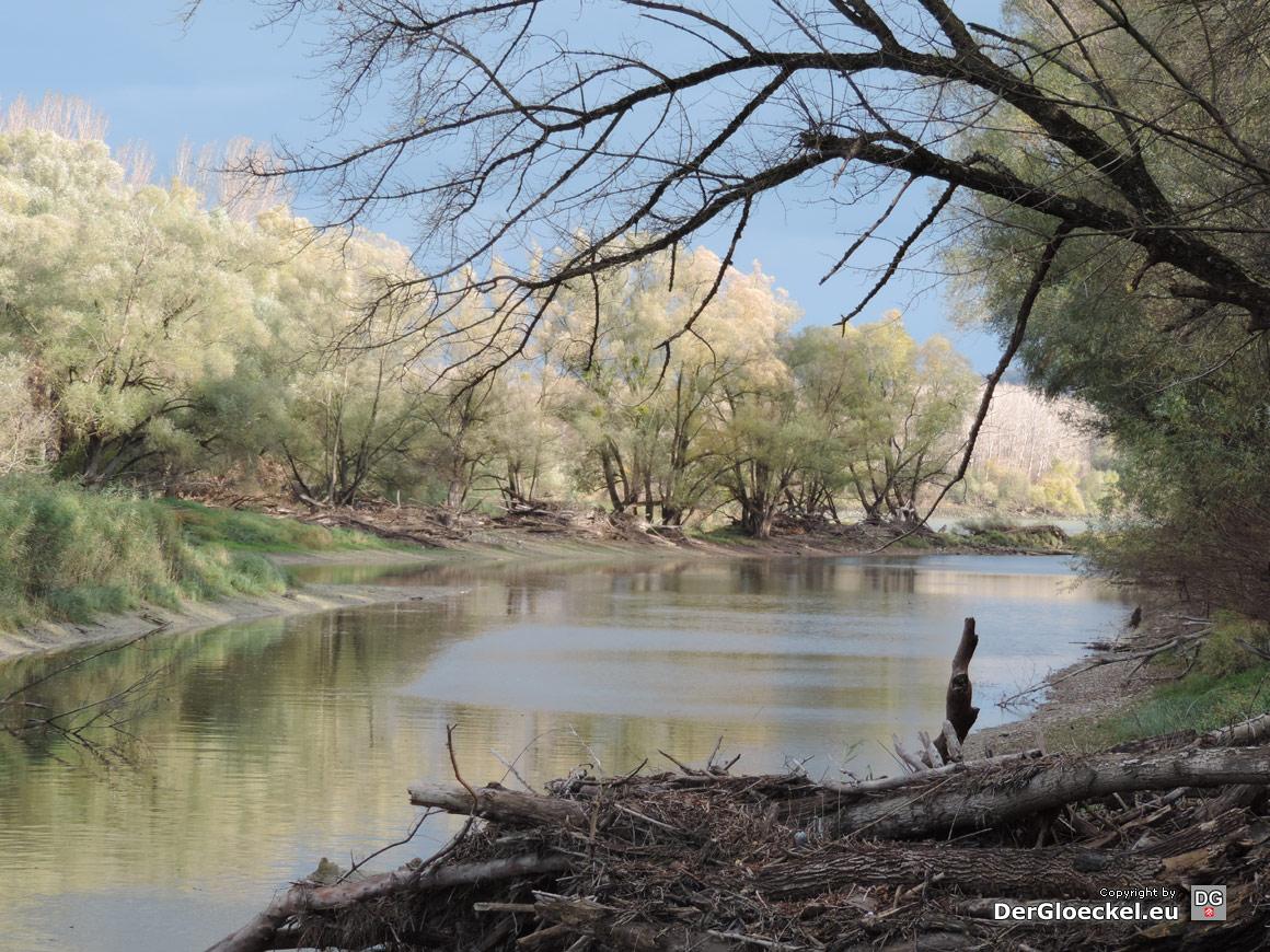 märchenhafte Donau-Auen | Foto: DerGloeckel.eu