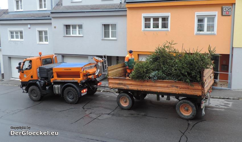 Seit über zwei Jahrzehnten Christbaum-Abholaktion in Hainburg