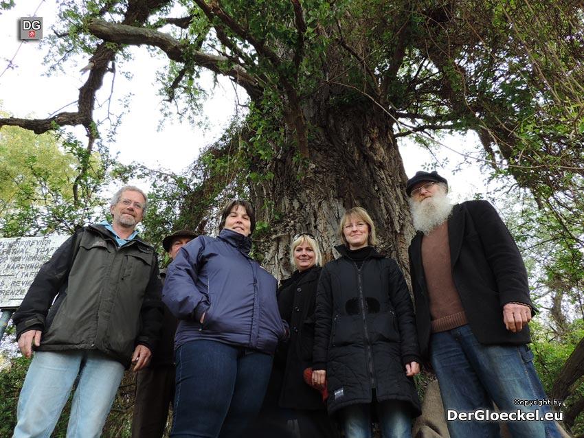Bürger verhindern Baumfällung in Hainburg