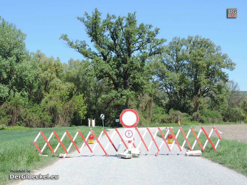 Zwischenruf zur Causa Baumfällung im Nationalparkgebiet Hainburg