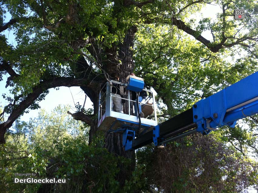 Baumuntersuchung unter Zuhilfenahme eines Kranes | Foto: DerGloeckel.eu