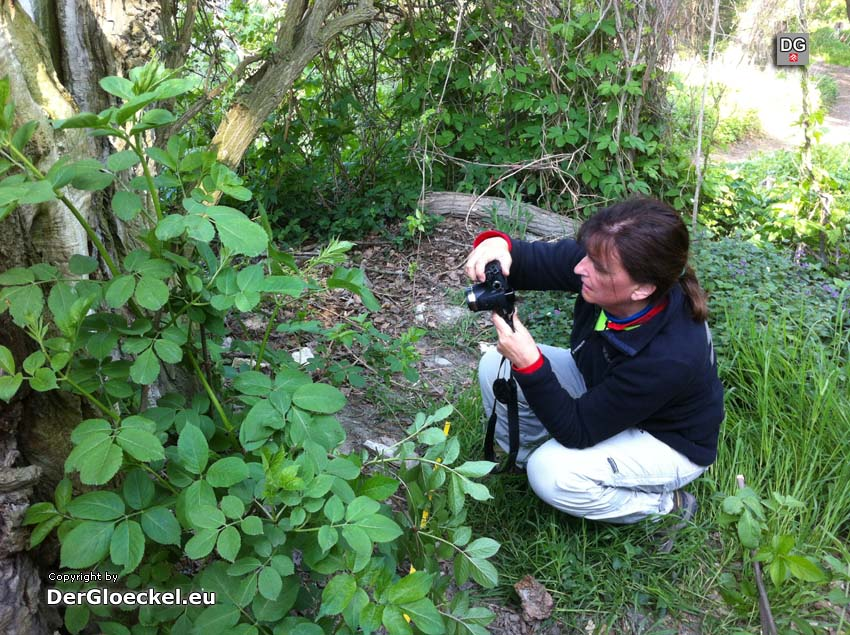 Helga Zodl bei der Baumdokumentation | Foto: DerGloeckel.eu